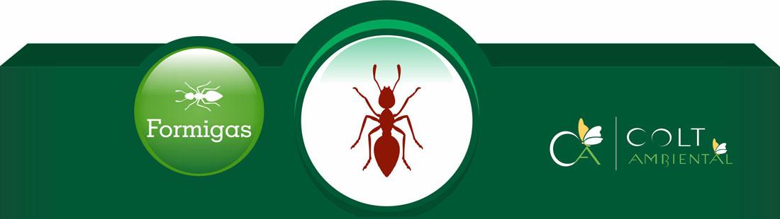 Combate à Formigas