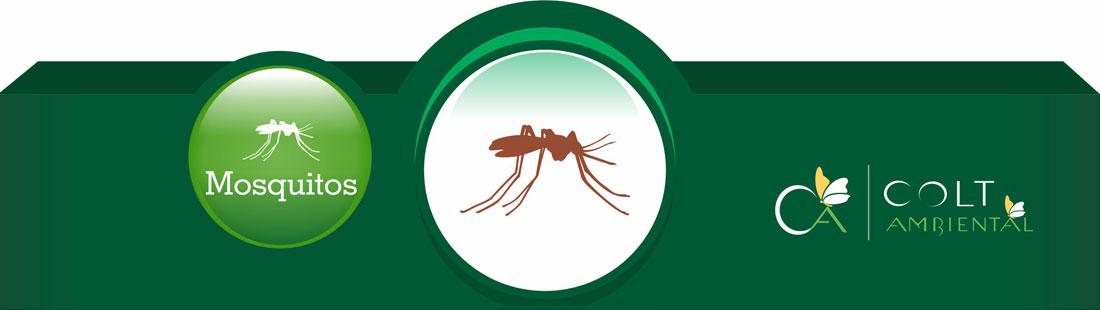 Combate à Mosquitos